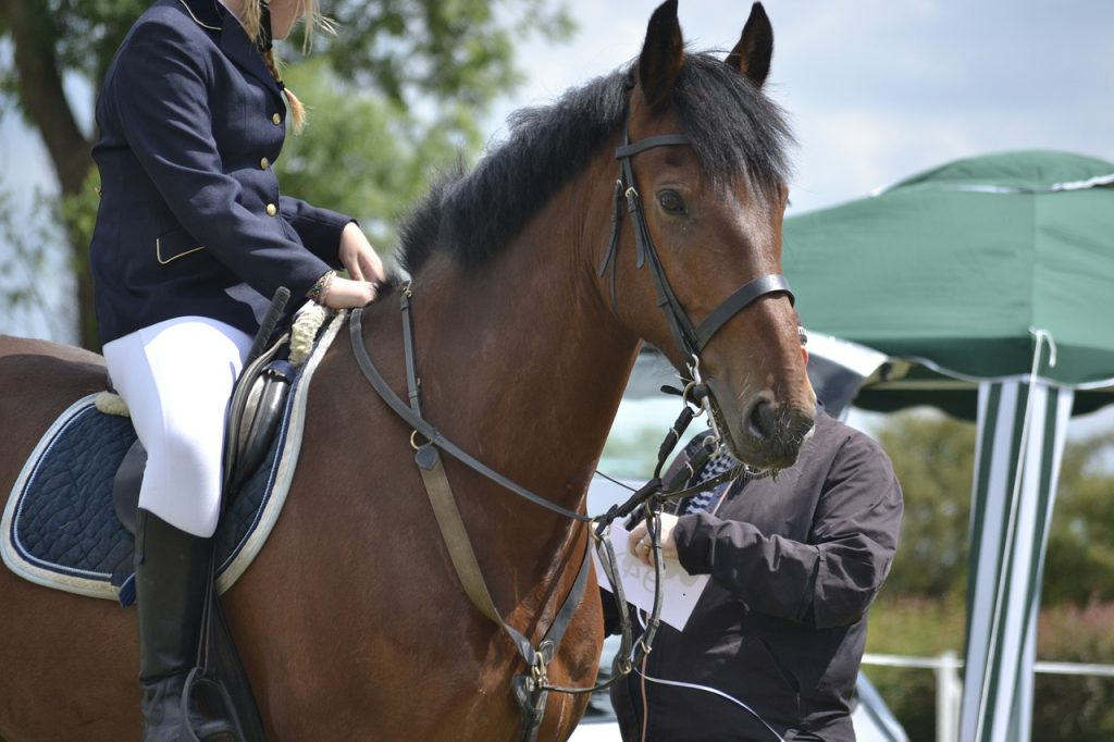 /wireless-communication-system-horse-riding-axiwi